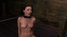 Brunette slave Nikki Bell gets a hard cock shoved down her throat in a bondage session