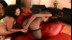 Curvaceous Black Lesbians Make Each Other Drip During A Threesome