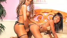 Delightful caramel lesbians drill each other's twats with a huge dildo